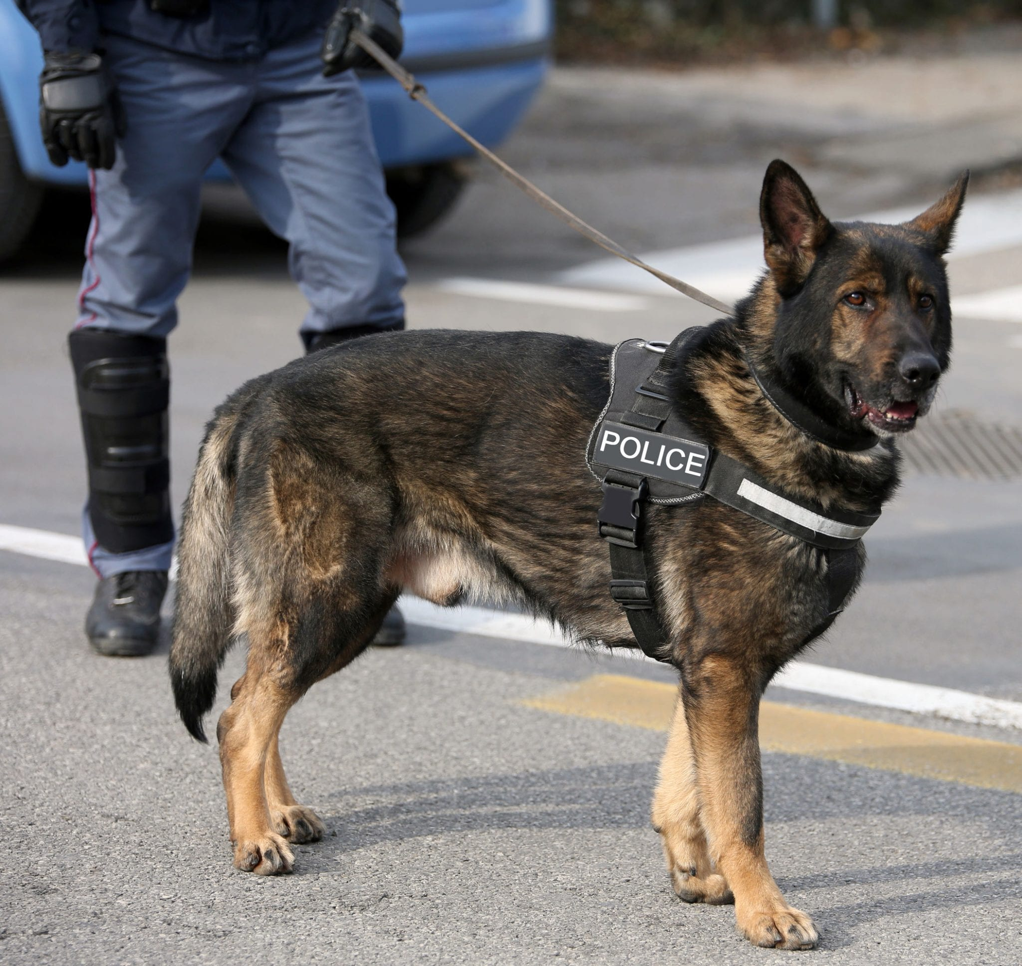 Busted for Drug Trafficking by a Texas Police Dog? Your Rights